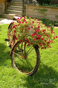 Old Bicycle upcycled into a planter
